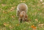 squirrel at central park new york