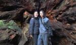 base of fallen redwood