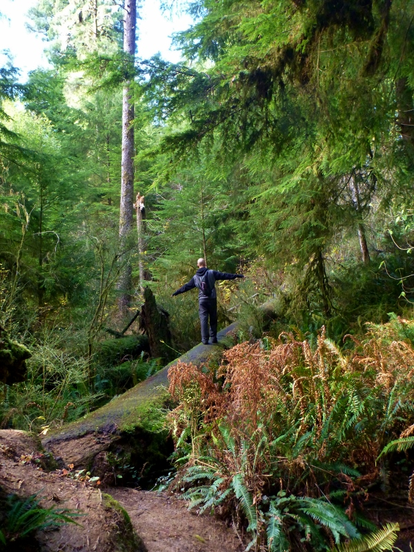 hiking through redwood national park boy scout trail