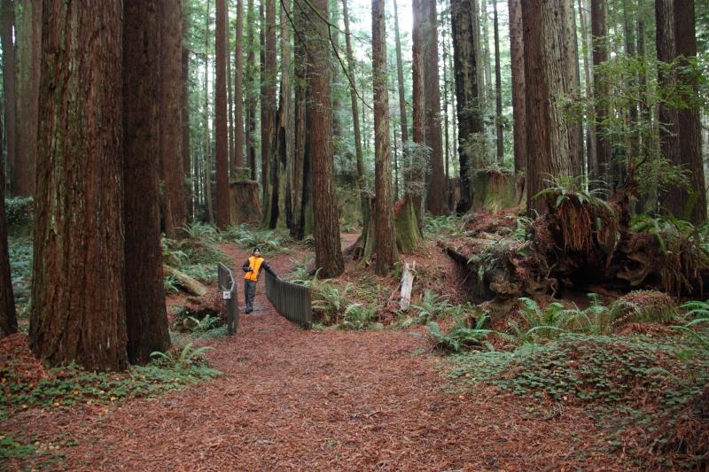 hiking through redwoods