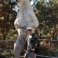 polar bear statue at san diego zoo