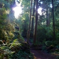 redwood national park boy scout trail