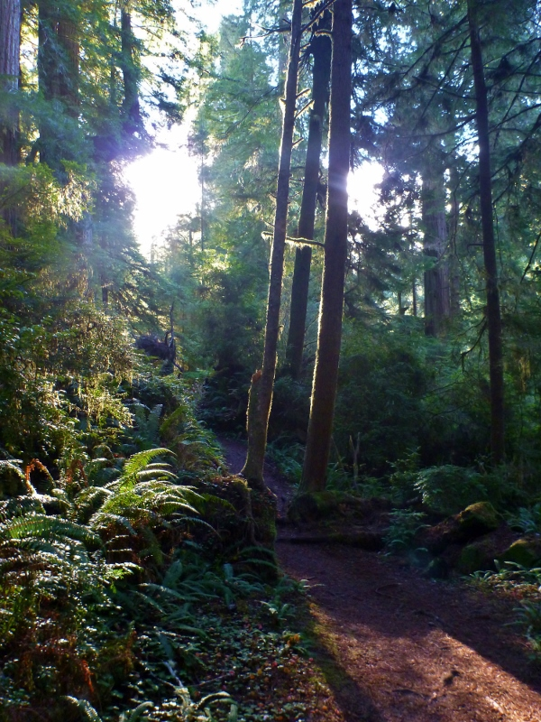 redwood national park boy scout trail
