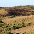 burnt out area ledge point dunes