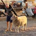 patting mac the pet sheep