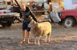 patting mac the pet sheep