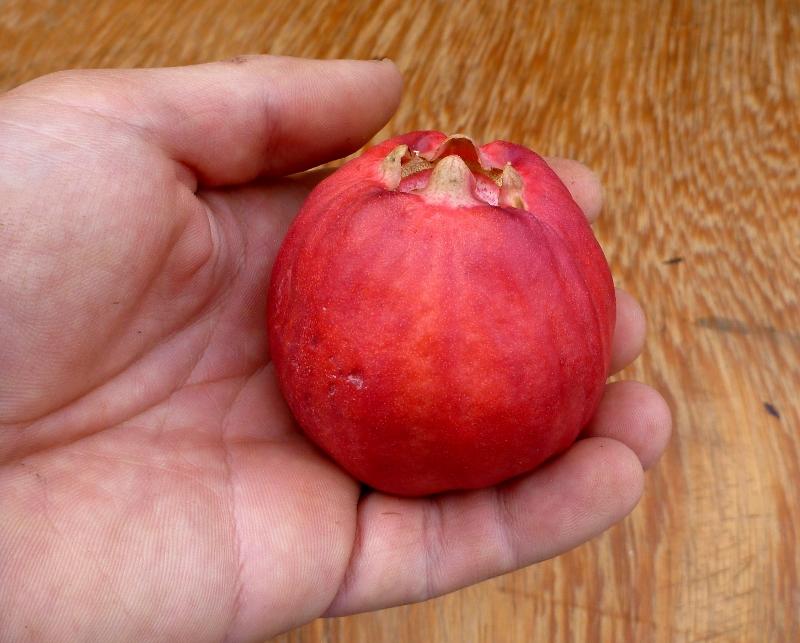 lady apple ripe fruit