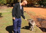 feeding kangaroos at balingup cheese factory