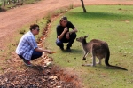 feeding kangaroos at heritage country cheese