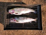 trout in the fish smoker