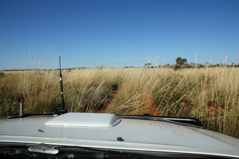 david carnegie road spinifex