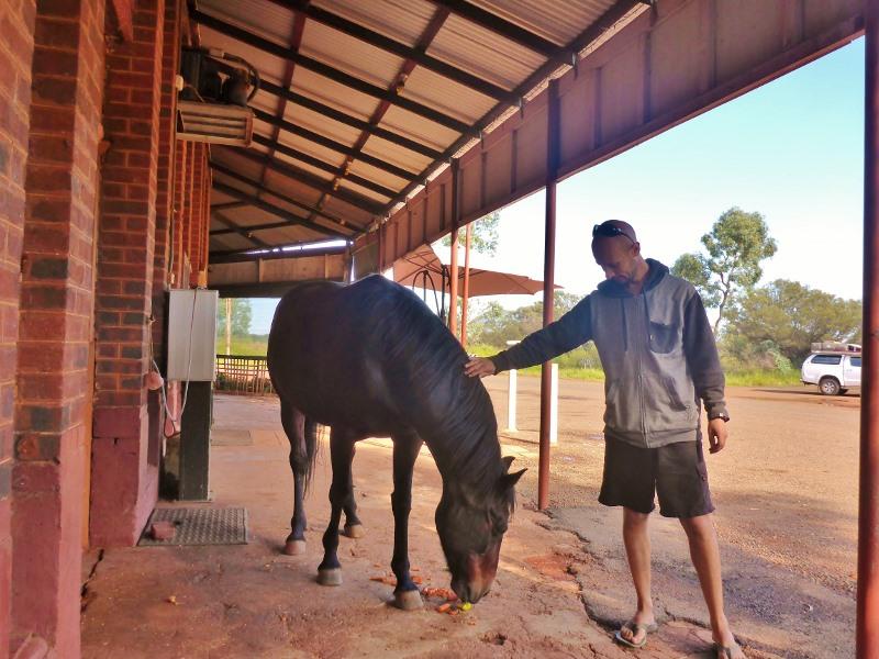 grand hotel kookynie horse