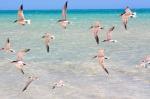 80 mile beach birds close