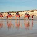 broome cable beach camels