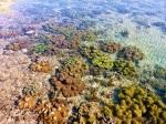 cape keraudren coral