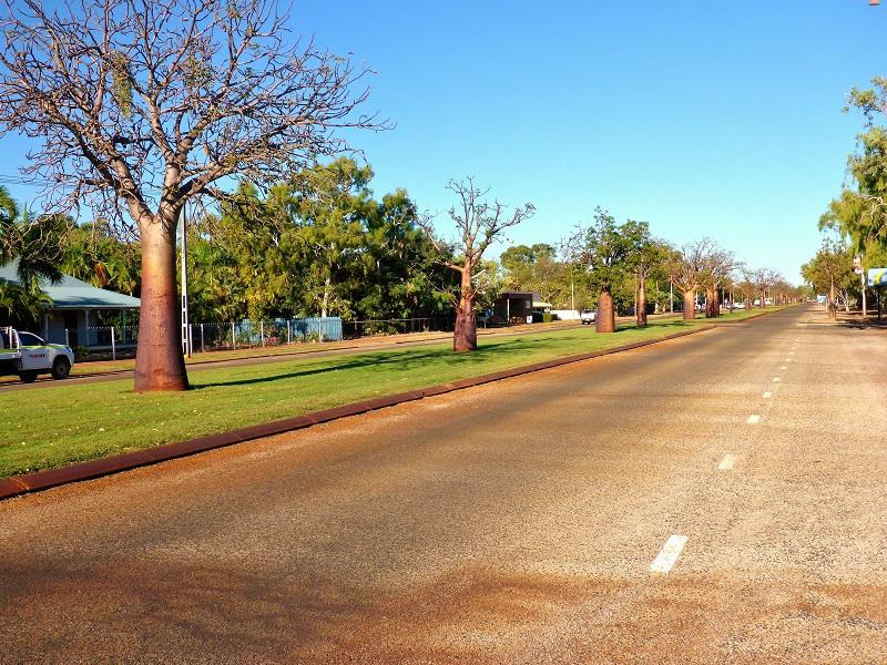 derby main street boab trees