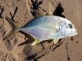 fishing at quondong beach