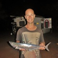 pender bay mackerel