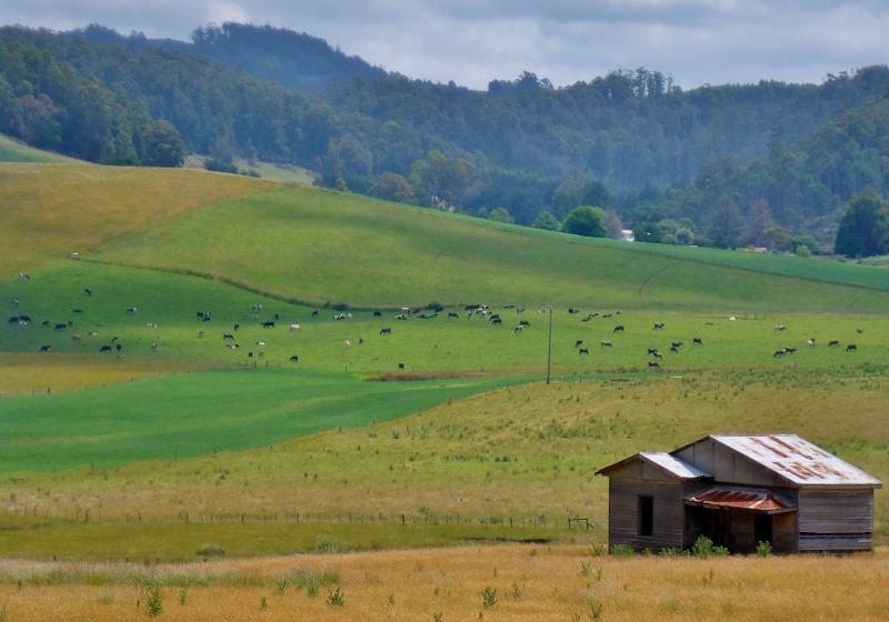 fields near wilmot