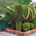 railton topiary hedges elephant