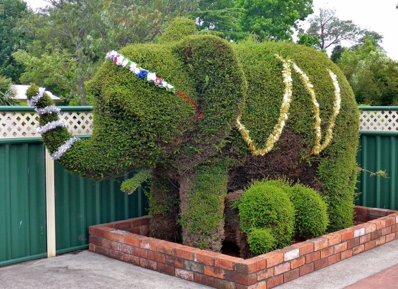 railton topiary hedges elephant