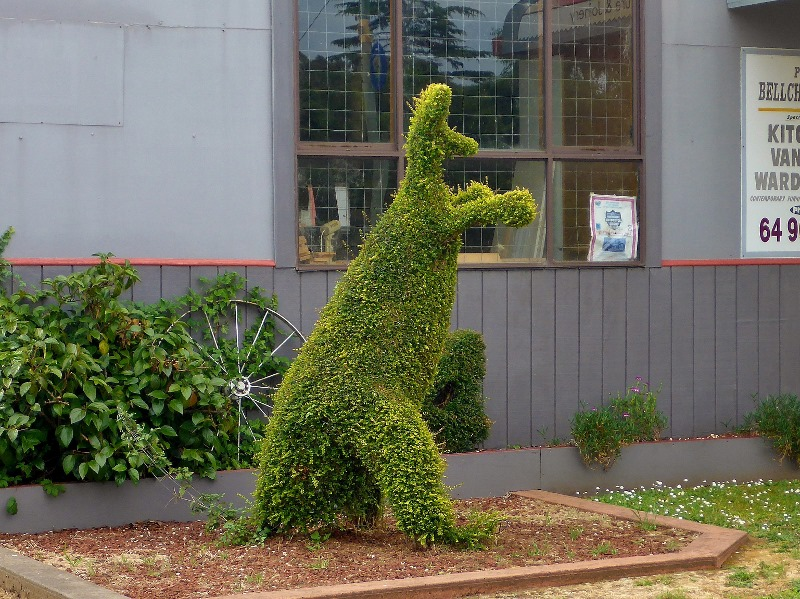 railton topiary hedges kangaroo