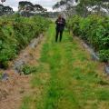 turners beach berry farm