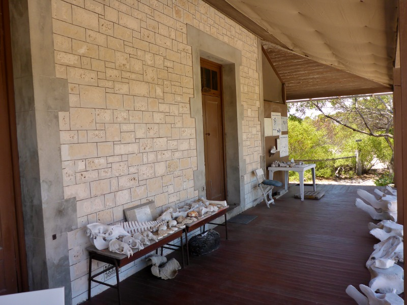 eyre bird observatory bones