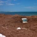 vehicle engulfed in seaweed kanidal beach