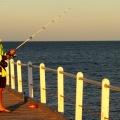 port neill squid fishing