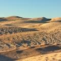 sceale bay dunes