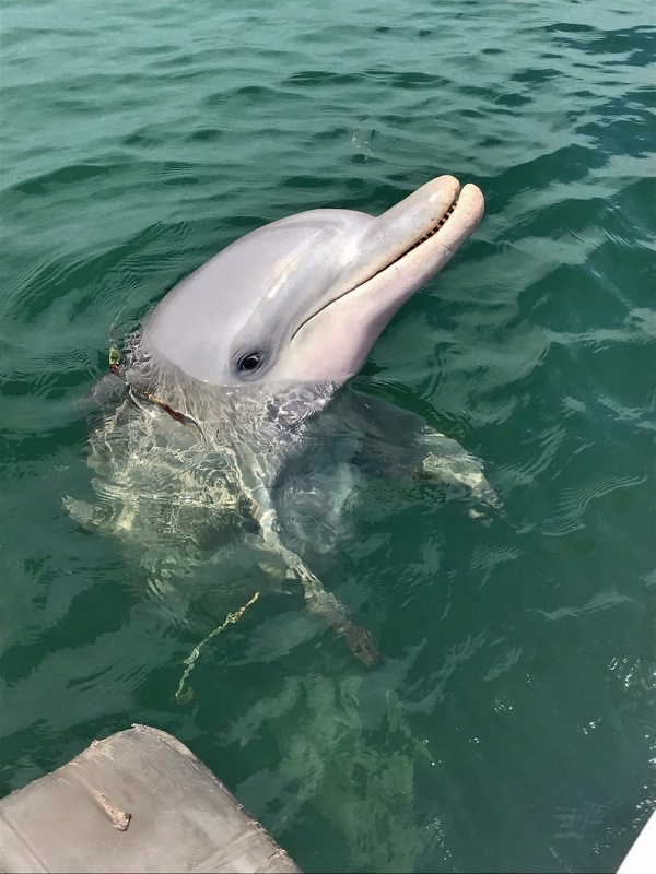 whyalla dolphin