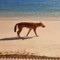 dingo beach stroll fraser island