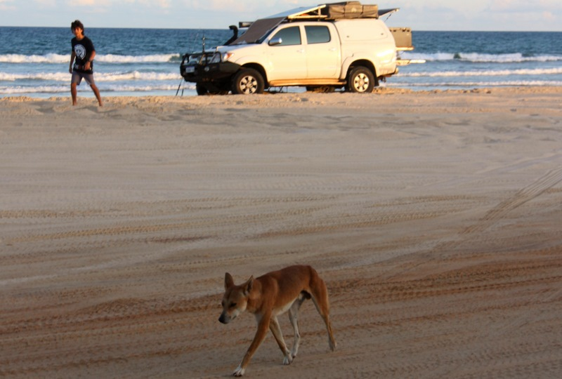 fishing with dingo fraser island