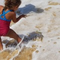 fraser island releasing dart fish